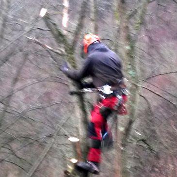 Beischneiden der Bäume am KK-Stand